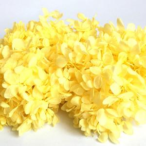 Bloemen - Gedroogde Hydrangea - Geel (+/- 1 gram)