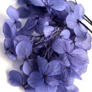 003-Hydrangea-Lavender